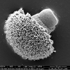 SEM image of carbonate crystals