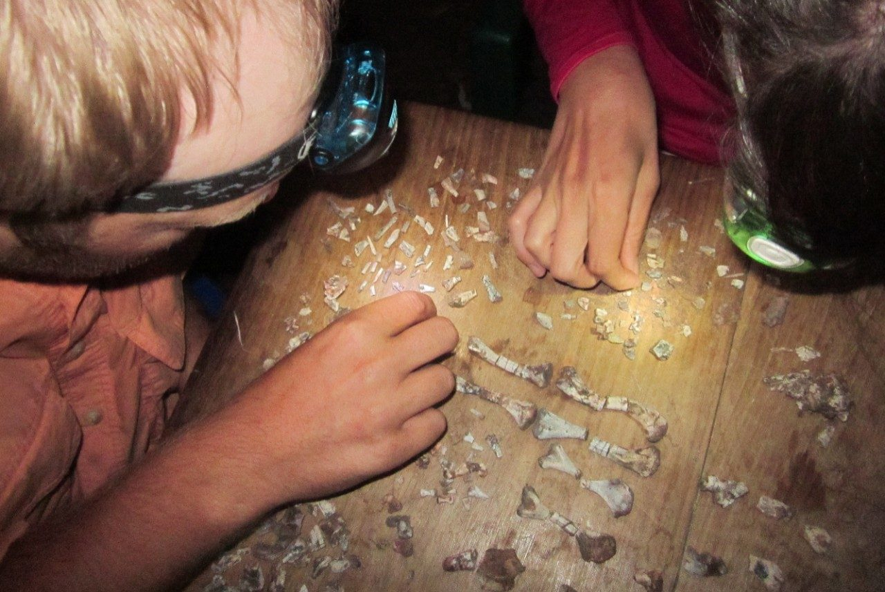 Michelle Stocker and Sterling Nesbitt piecing together a small skeleton of an extinct reptile in Tanzania in 2012.