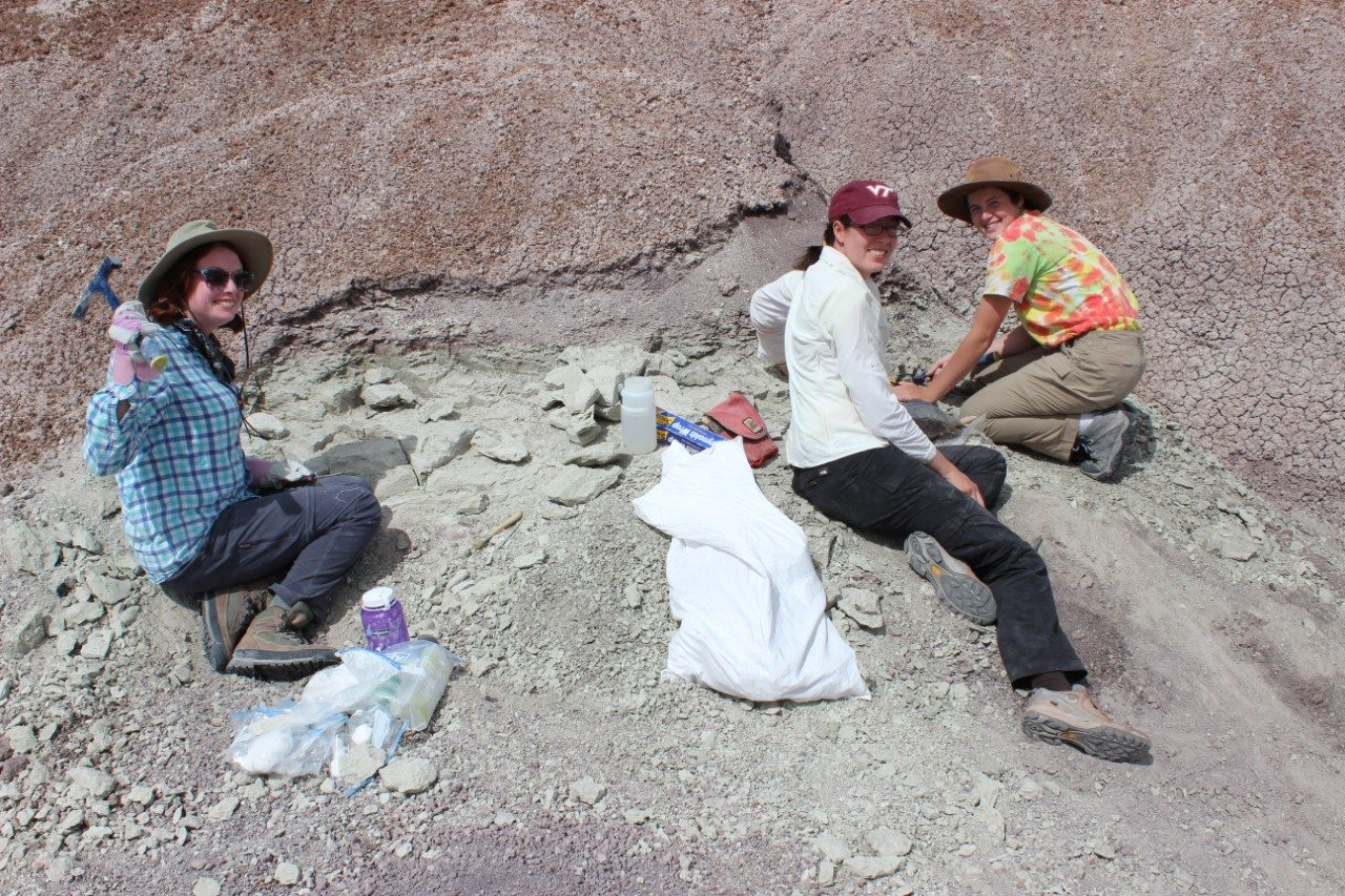 The vertebrate paleontology research group from Virginia Tech collecting fossils in Arizona in 2015.